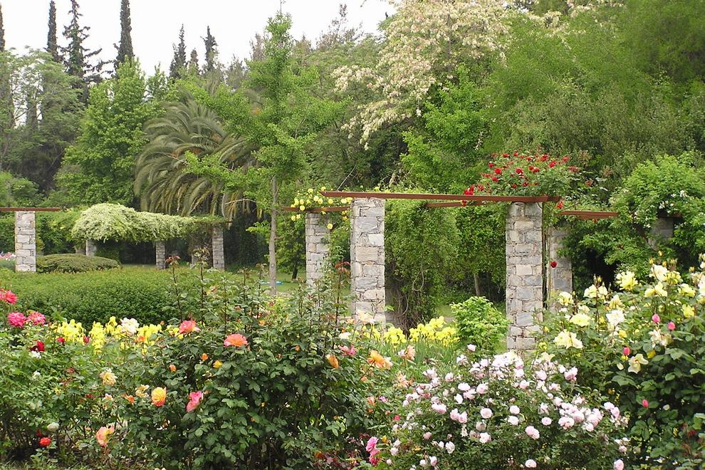 ... Garden.001 Ginkgo Biloba 54 990x660 201404240754 Dsc00212
